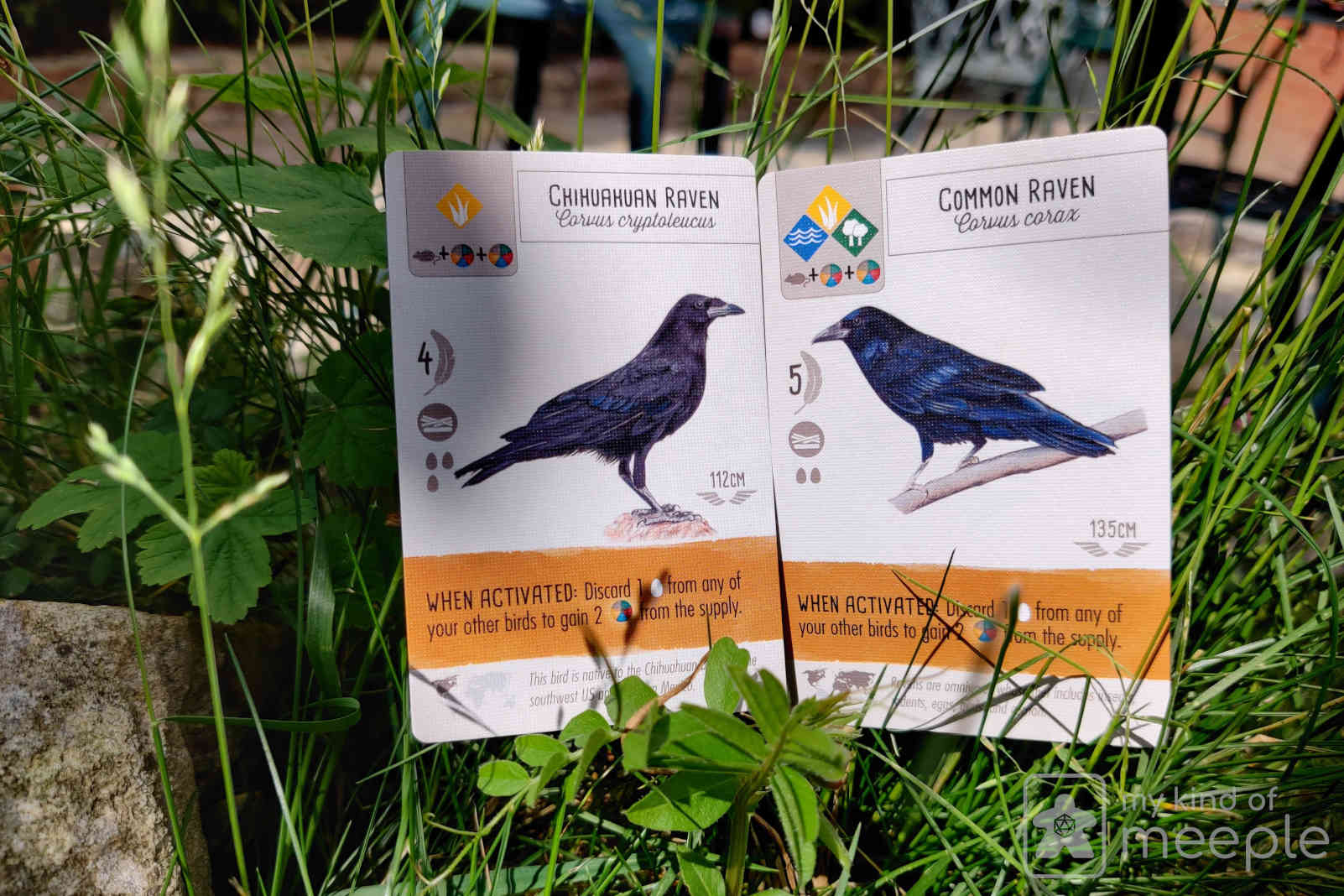 Chihuahuan Raven and Common Raven cards in grass in my garden